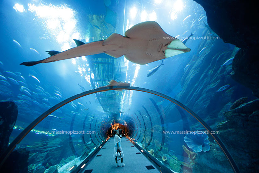 United Arab Emirates, Dubai, Acquarium at the Mall