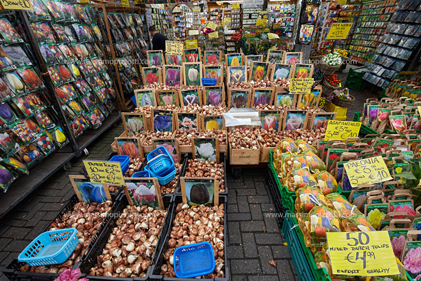 Netherlands, Amsterdam, Tulip bulbs at flowers market