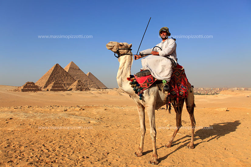 Egypt, Giza, Camel in front of Pyramids