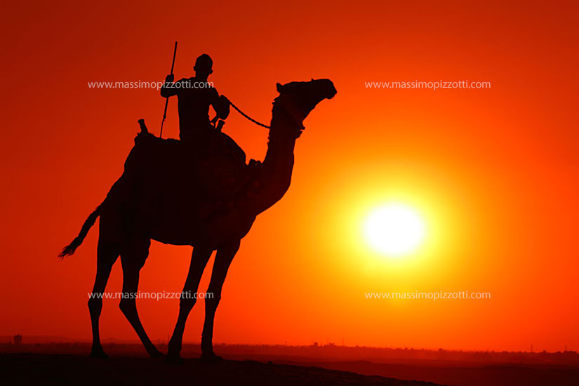 Egypt, Giza, Camel s silhouette at sunset