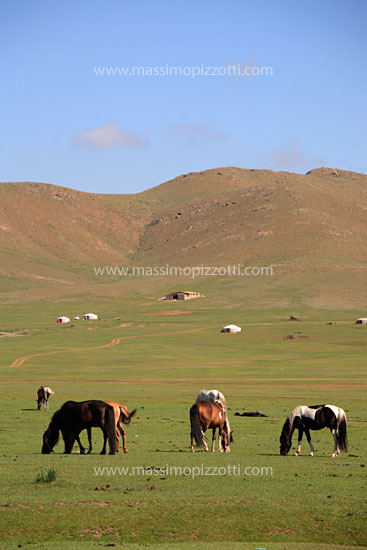 Mongolia, Countryside, Horses in the steppe