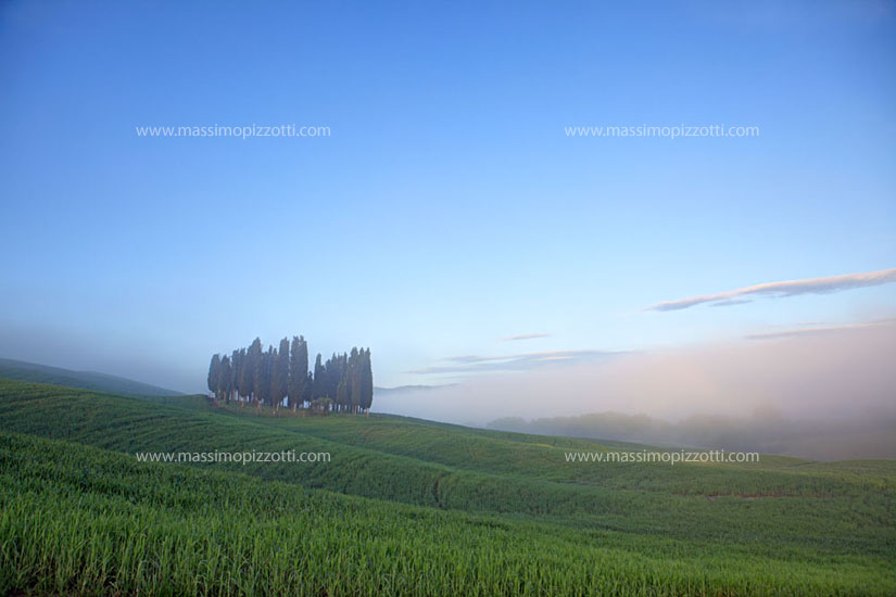 Italy, Val d Orcia, Cypress trees